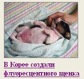 Корейские флуорисцентные собаки