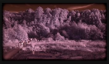 Lightroom IR colors