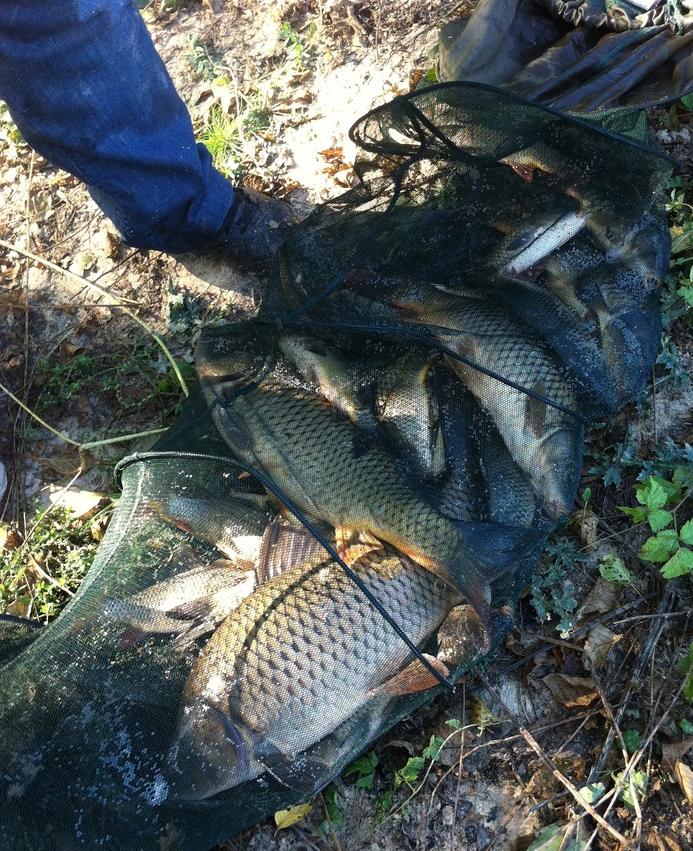 рыбный клев в харькове