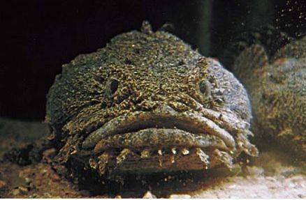 По словам учёных, схема нервной регуляции звуков, возникнув ещё у древних рыб, в... Вокальные способности...