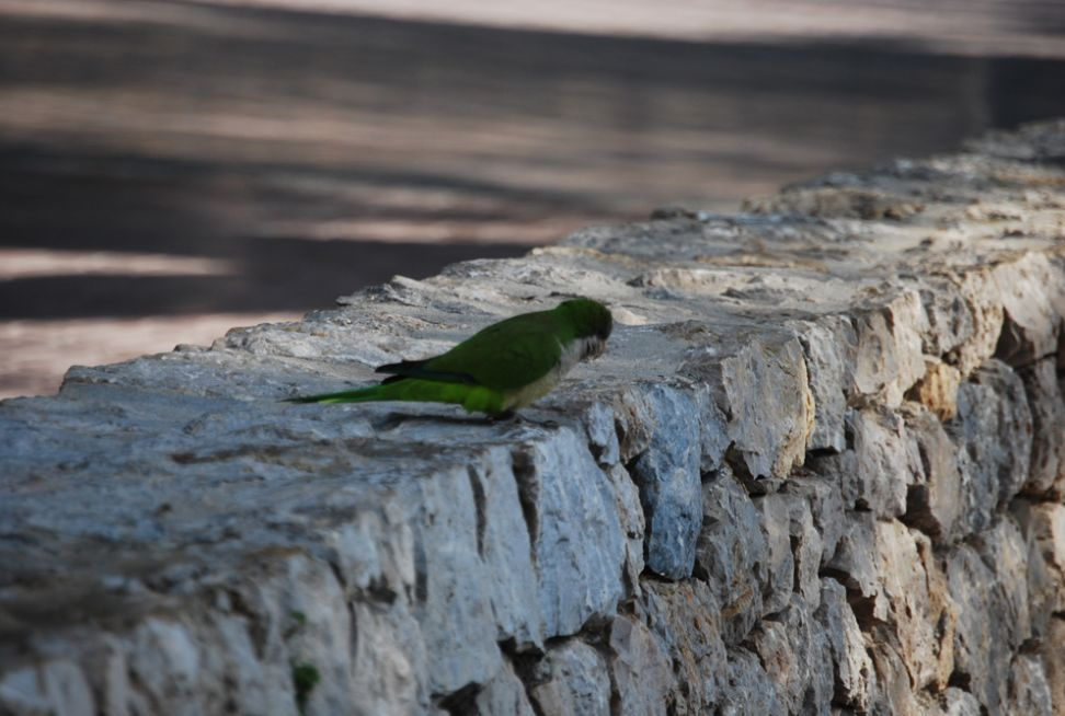 От мертвых деревьев к попугаям в сосновой роще