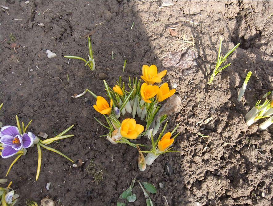 Весеннее индиго