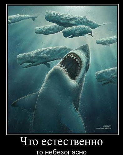 обои для рабочего стола кашалоты и акула. кашалоты и акула.